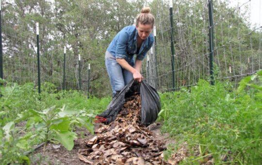 What is Alternative Gardening?